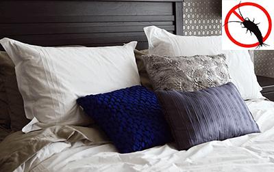 silberfische im schlafzimmer bett bek mpfen tipps mittel 2019. Black Bedroom Furniture Sets. Home Design Ideas
